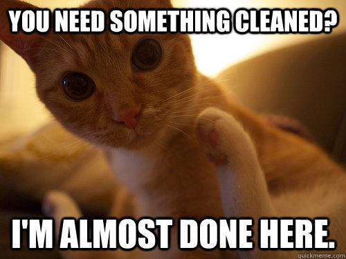 you need something cleaned im almost done here - Clean Cat Likes to Clean