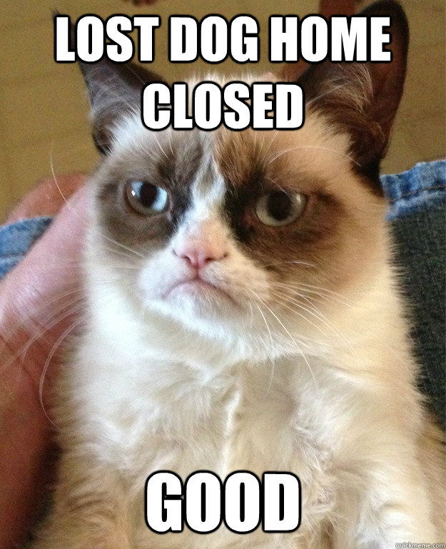 lost dog home closed good - Grumpy cat
