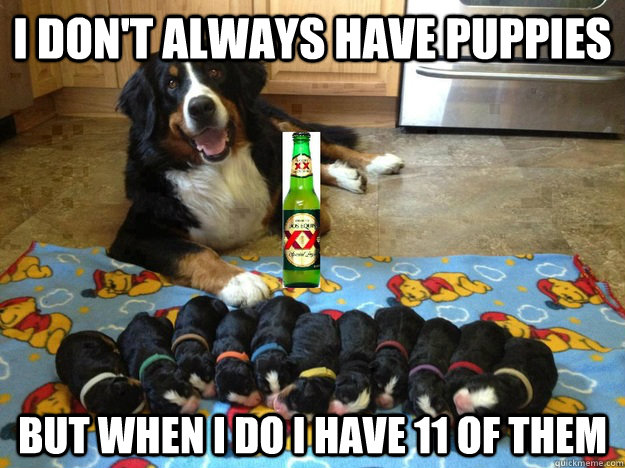 i dont always have puppies but when i do i have 11 of them -