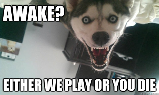 awake either we play or you die - Overly Attached Dog
