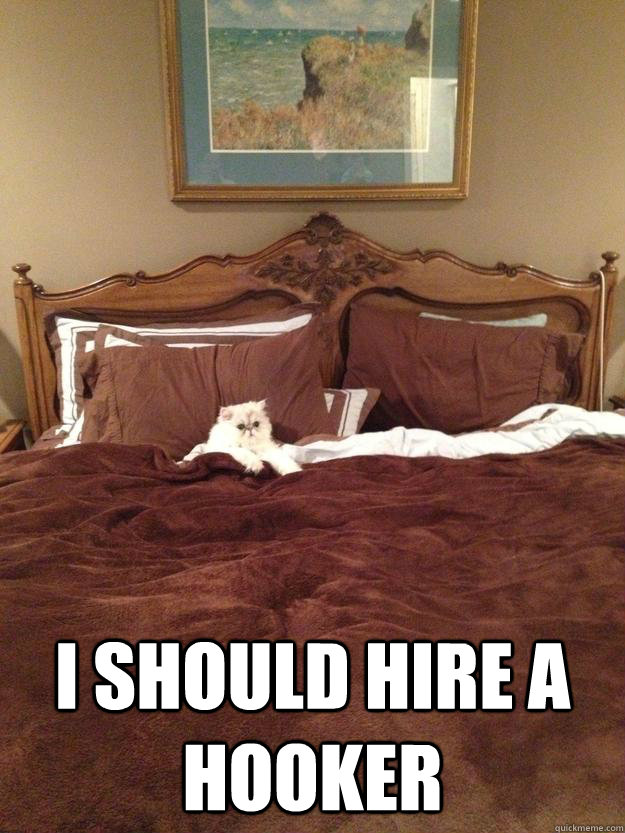i should hire a hooker - Sophisticated Cat in Bed