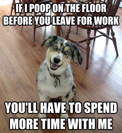 if i poop on the floor before you leave for work youll have - Overly Attached Dog