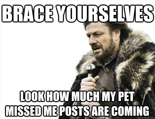 brace yourselves look how much my pet missed me posts are co - BRACEYOSELVES
