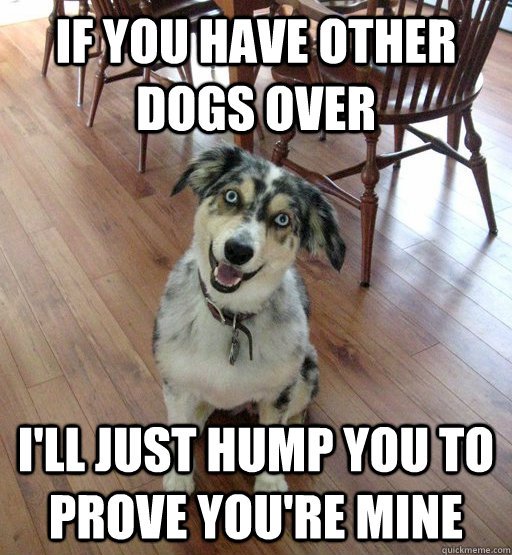 if you have other dogs over ill just hump you to prove you - Overly Attached Dog