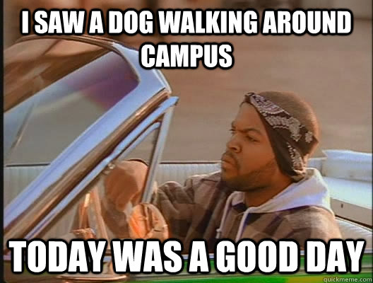 i saw a dog walking around campus today was a good day - today was a good day