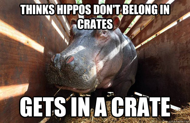 thinks hippos dont belong in crates gets in a crate - Hippo Crate