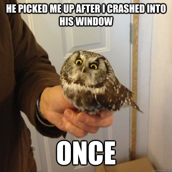 Baby Owl Memes This Baby Owl Hit Our Window