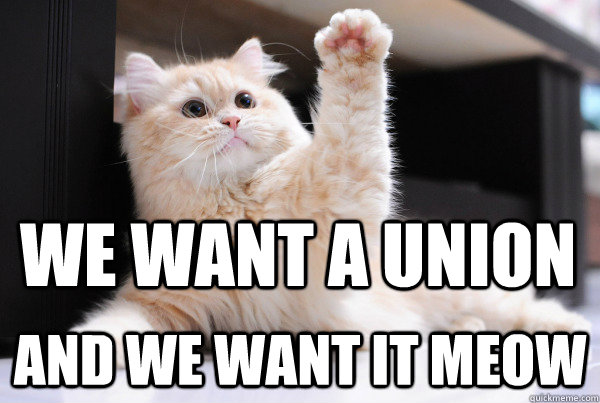 we want a union and we want it meow -