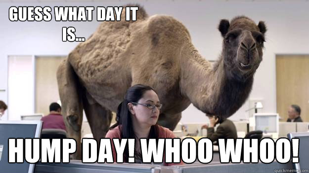 guess what day it is hump day whoo whoo - Hump Day Camel