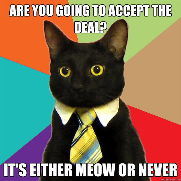 are you going to accept the deal its either meow or never - Business Cat