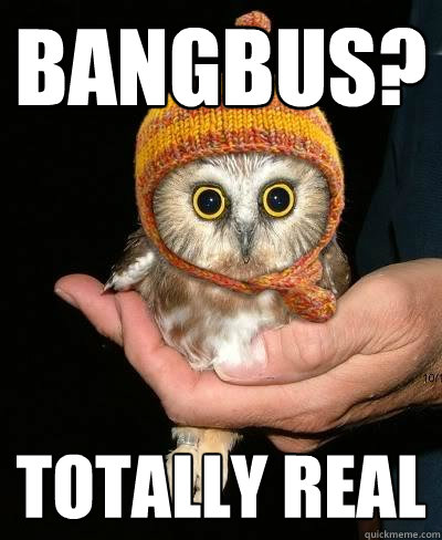 bangbus totally real - Snopeless Owl
