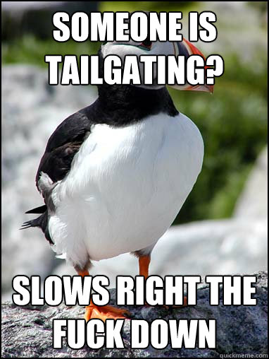 someone is tailgating slows right the fuck down - Passive-aggressive puffin