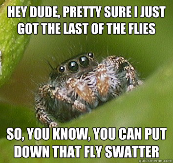 hey dude pretty sure i just got the last of the flies so y - Misunderstood Spider