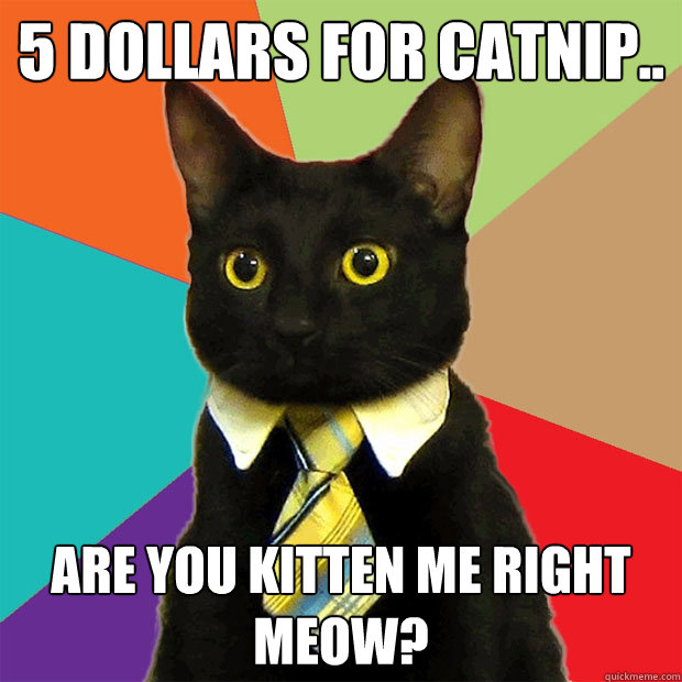 5 dollars for catnip are you kitten me right meow - Business Cat