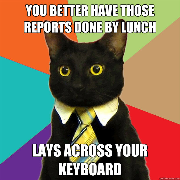 you better have those reports done by lunch lays across your - Business Cat
