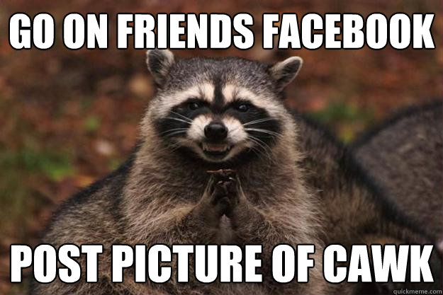 go on friends facebook post picture of cawk - Evil Plotting Raccoon