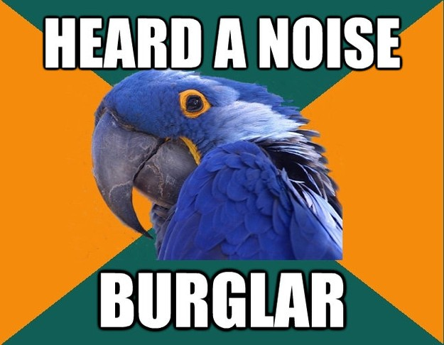 heard a noise burglar - Paranoid Parrot