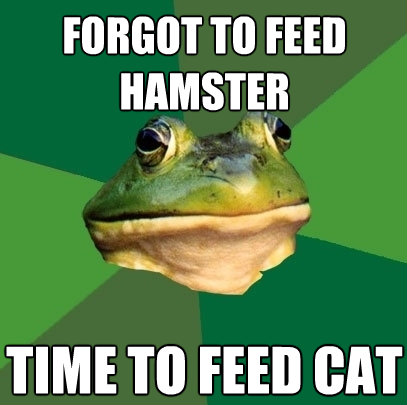 forgot to feed hamster time to feed cat - Foul Bachelor Frog