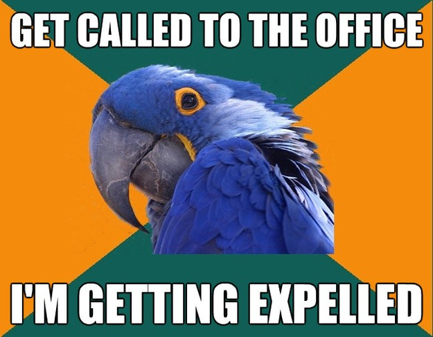 get called to the office im getting expelled - Paranoid Parrot