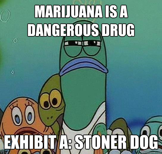 marijuana is a dangerous drug exhibit a stoner dog - Serious fish SpongeBob