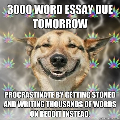 3000 word essay due tomorrow procrastinate by getting stoned - Stoner Dog