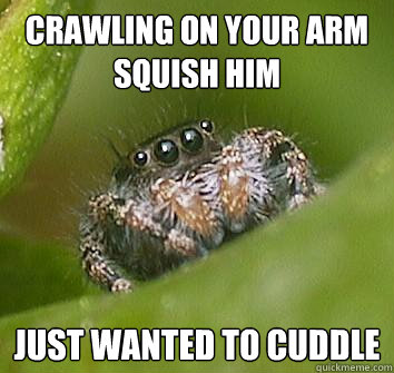 crawling on your arm squish him just wanted to cuddle - Misunderstood Spider