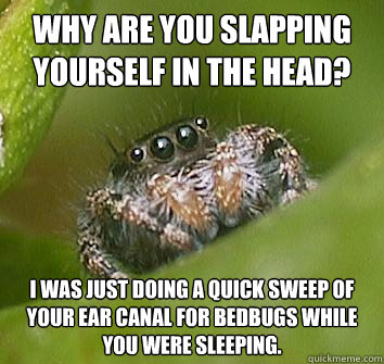 why are you slapping yourself in the head i was just doing  - Misunderstood Spider